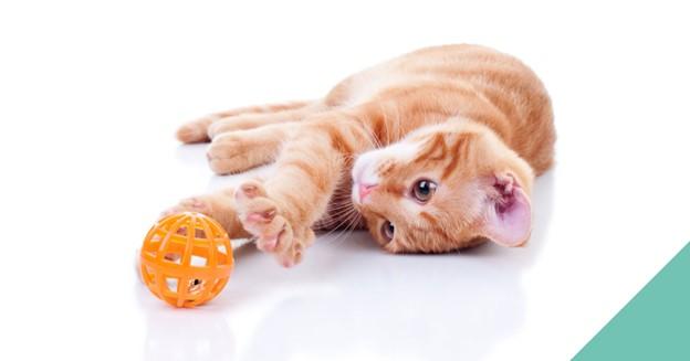 Cat-toy