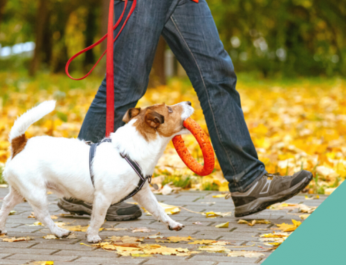 Walking your dog safely in autumn and winter