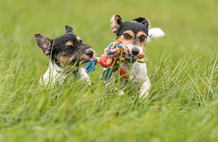 Dog Dental Care