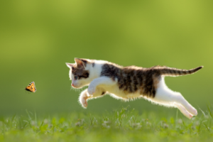 Flea and Worm Treatment For Your Cat - MetroVet in Wood Green London