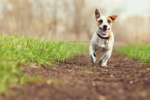 Flea and Worm Treatment For Your Dog - MetroVet in Wood Green London
