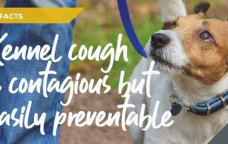 kennel-cough