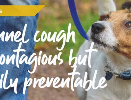 Kennel cough myths and facts