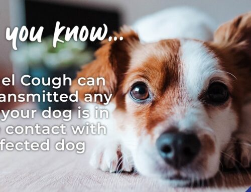 Protect your dog against Kennel Cough