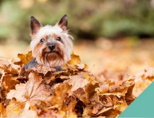 Keeping your pet safe this autumn