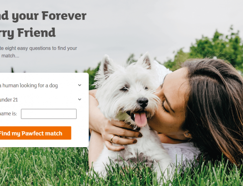 New Tool Helps Match Your Preferences to Pet Breeds