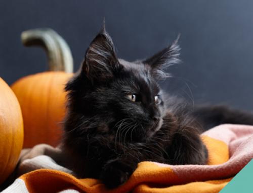 Halloween Awareness