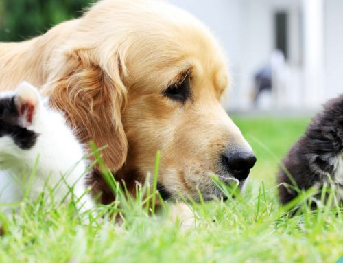 Top 10 hazards to watch out for this summertime to protect your pets