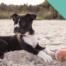 dog-beach