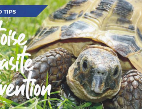 Tortoise parasite prevention