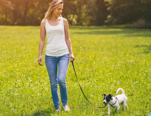How to teach your dog to walk with a lead