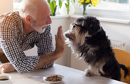 Man high fiving a dog image