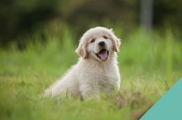 dog-happy