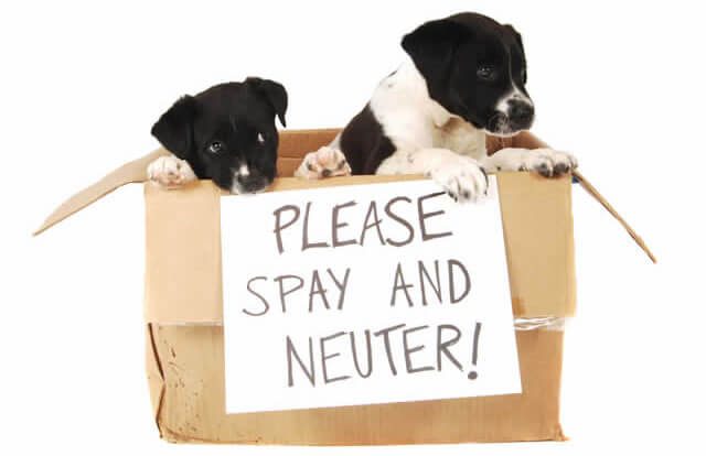 Spay and neuter sign with puppies in box