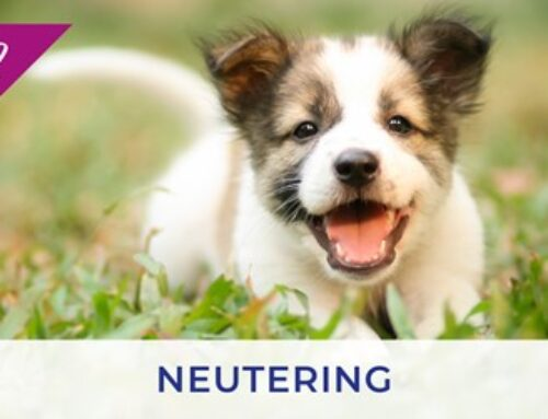 Neutering puppies and kittens