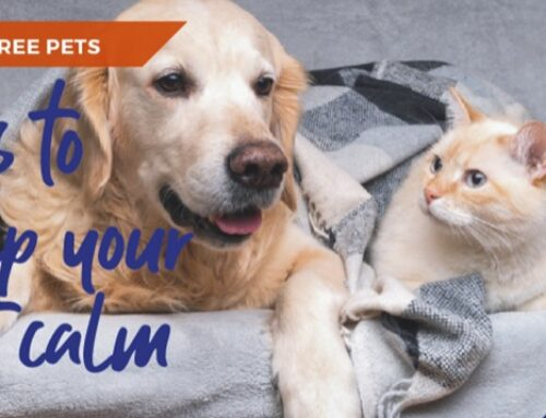 Top tips to calm your anxious and stressed pet